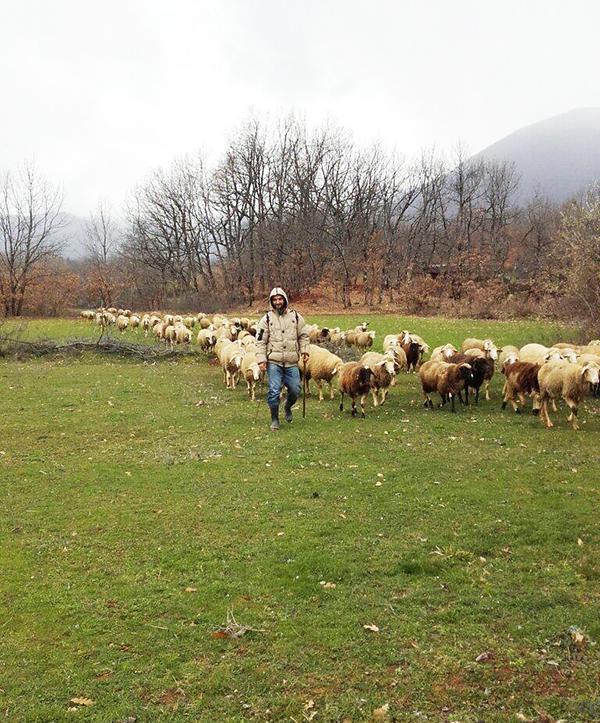 Pastir iz Makedonije